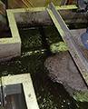農場排水汚泥